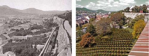Szőlő a Vár oldalában a XIX. sz. végén és a tervezett szőlő a jövőben